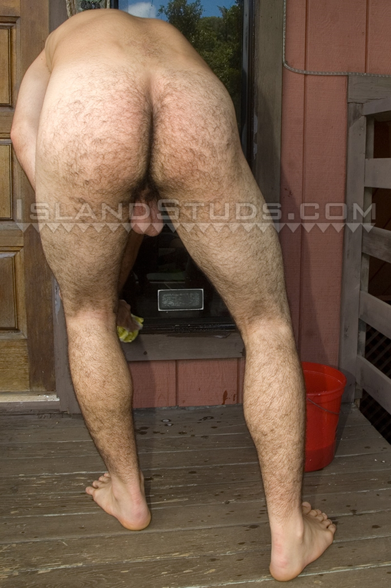free hairy bear gay gallery